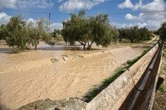 Coltivazione di di olivo, sommersa dalle pioggie persistenti, la Spagna Fotografia Stock