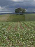 Coltivazione di nuovi raccolti agricoli Fotografia Stock Libera da Diritti