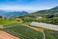 Coltivazione di verdure sulla montagna nella sierra al nordico della Tailandia Fotografia Stock Libera da Diritti