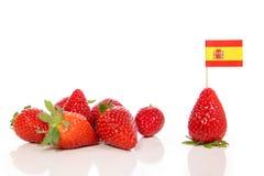 Coltivazione e crescere in Spagna, fragole isolate su bianco fotografia stock