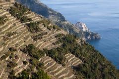 Coltivazioni alla Cinque Terre. Cultivation of grapevines in terraces to the Cinque Terre Stock Photos