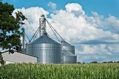 Coltivi i recipienti/silos del grano con il campo di mais ed il cielo Fotografia Stock