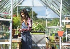 Coltivi il concetto stagionale della crescita della natura del giardino immagine stock