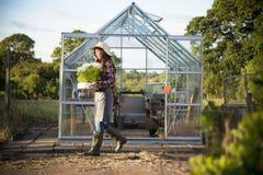 Coltivi il concetto stagionale della crescita della natura del giardino fotografie stock