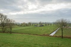 Coltivi il paesaggio ed il prato verde nei Paesi Bassi Immagine Stock