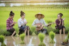 Coltivi il riso Fotografie Stock Libere da Diritti