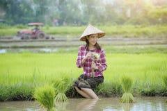 Coltivi il riso Fotografia Stock Libera da Diritti
