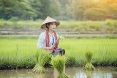 Coltivi il riso Fotografie Stock