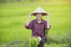 Coltivi il riso Immagine Stock