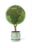 Coltivi il vostro proprio piccolo pianeta verde fotografia stock