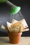 Coltivi l'euro Fotografia Stock