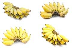 Coltivi la banana fotografie stock libere da diritti