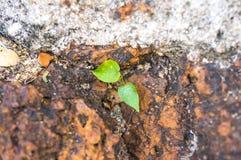 Coltivi la pianta Fotografia Stock Libera da Diritti
