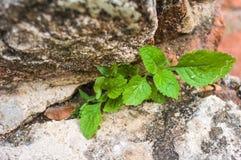 Coltivi la pianta Immagine Stock Libera da Diritti