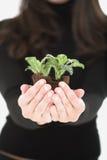 Coltivi la pianta immagini stock libere da diritti