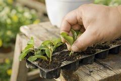 Coltivi le piante Fotografie Stock Libere da Diritti