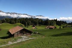 Coltivi nelle alpi nel Bernese Oberland, Svizzera Fotografie Stock Libere da Diritti