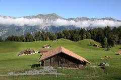 Coltivi nelle alpi nel Bernese Oberland, Svizzera Immagini Stock Libere da Diritti