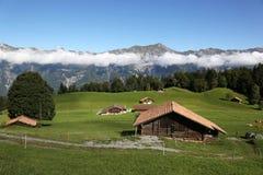 Coltivi nelle alpi nel Bernese Oberland, Svizzera Fotografia Stock Libera da Diritti