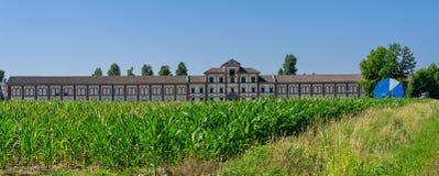 Coltivi vicino a Vercelli, Italia, all'estate immagine stock libera da diritti