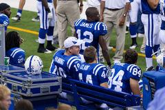 Colts bench Royalty Free Stock Photography
