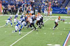 Colts-Bengals football game. Indianapolis, IN - September 2, 2010 Royalty Free Stock Photography