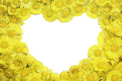 Coltsfoot's heart frame Royalty Free Stock Images