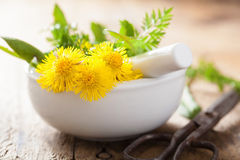 Coltsfoot flowers spring herbs in mortar Stock Photography