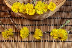 Coltsfoot. A macro photo of coltsfoot stock images