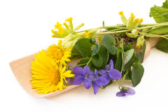 Coltsfoot and violets on a wooden scoop Stock Photography