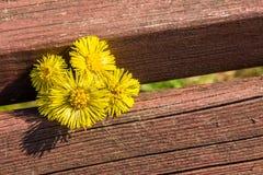 Coltsfootblumen sind auf der Bank im Frühjahr Stockfotos