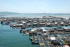 Coltura ed allevamento dei pesci e dei crostacei Fotografia Stock
