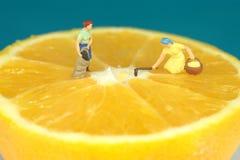 Coltura sull'arancio Immagini Stock
