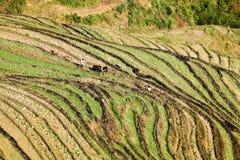 Coltura a terrazze dei campi nella sorgente Immagini Stock