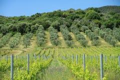 coltura, Toscana Fotografia Stock