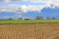 Colture miste e paesaggio agricolo immagini stock libere da diritti