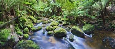 Columba Creek Panorama Arkivfoto