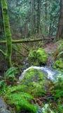 Columbia Britânica, costa, floresta tropical, queda da água, ilha do pender sul Imagens de Stock