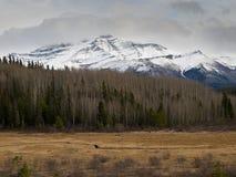 Columbia Britânica do norte Fotografia de Stock