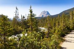 Columbia Britânica do parque nacional do yoho da opinião do rio de Yoho, Canadá Fotografia de Stock Royalty Free