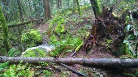 Columbia Britannica, costa, foresta pluviale, caduta dell'acqua, isola del pender del sud Immagini Stock