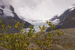 The Columbia glacier in Alberta, Canada. The Columbia glacier, one leg of the Athabasca icefield with snow coaches taking tourist onto the glacier as seen from royalty free stock photo