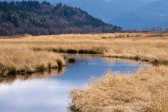 Columbia Gorge view water grass trees ducks Stock Photo