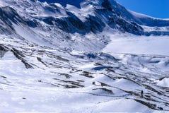 Columbia Icefield i ny snövintersäsong Fotografering för Bildbyråer