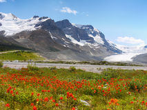 Columbia Icefield, Mt. Athabasca Glacier Stock Images