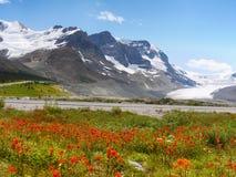 Columbia Icefield, Mt jasper för icefield för alberta athabascaKanada kanadensisk columbia berömd glaciär mest nationalpark tagna Arkivbilder