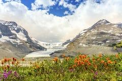 Columbia Icefield och lös apelsin blommar i Jasper National Par Royaltyfri Foto
