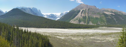Columbia Icefield panorama- landskap i Alberta Kanada Royaltyfri Foto
