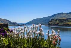 Columbia River Arkivfoton