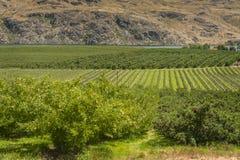 Columbia River Apple fruktträdgårdar Arkivbild